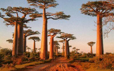 Conseil voyage : destination à Madagascar